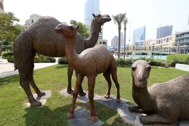 Camels Downtown